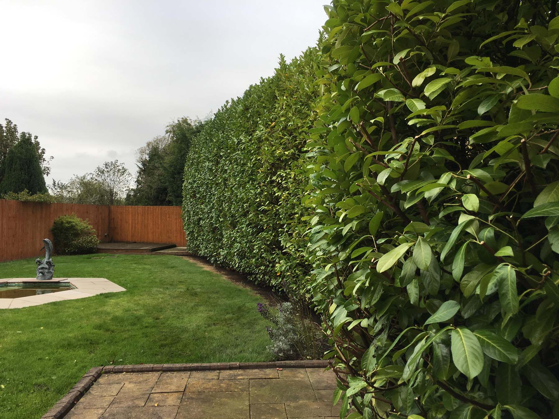 Hedge Pruning Service 2