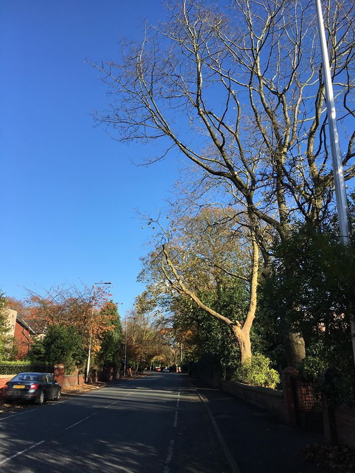 Tree Surgeon Crown lifting Service 3