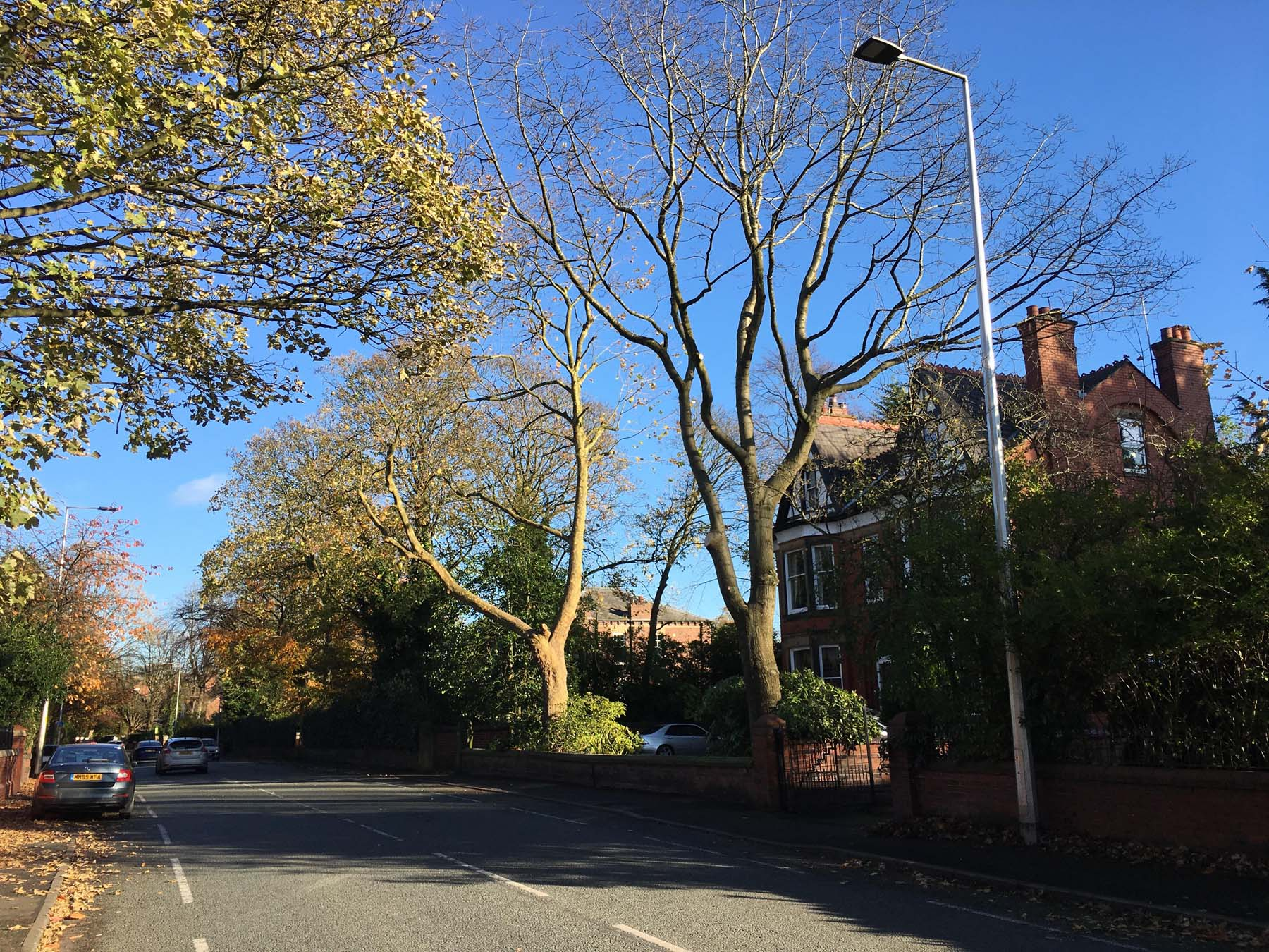 Tree Surgeon Crown lifting Service 4