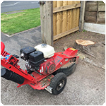 Tree Surgeon Stump Grinding Service 2