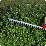 Tree-Surgeon_Hedge-Removal-Service