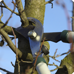 Tree-Surgeon_Tree-Pruning-Service
