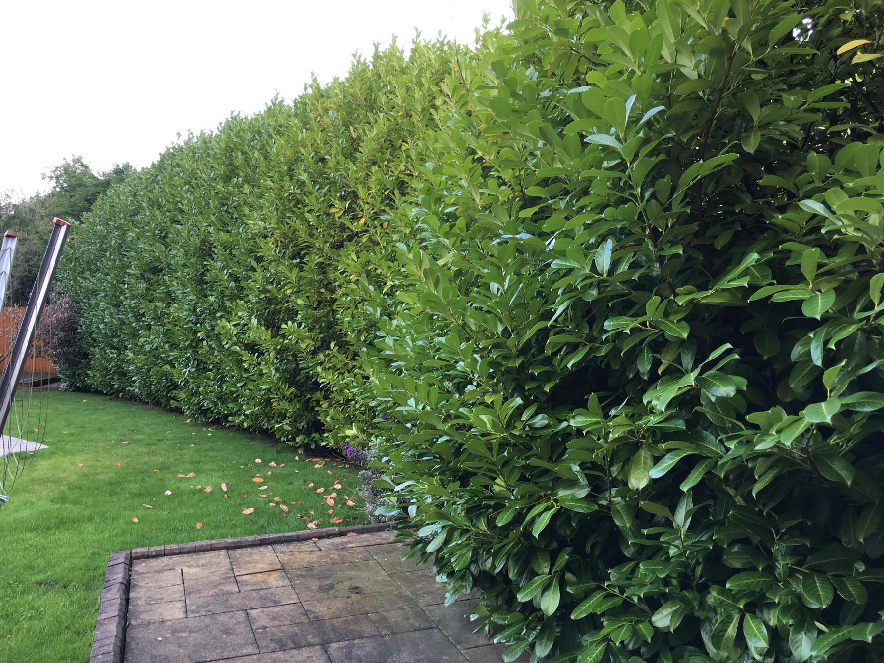 Hedge Pruning Service 1