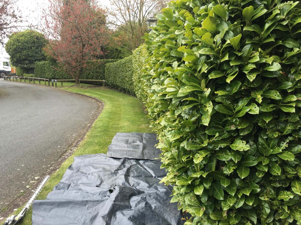 Hedge Pruning Service 3