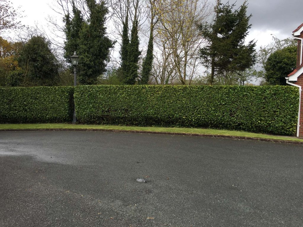 Hedge Pruning Service 4