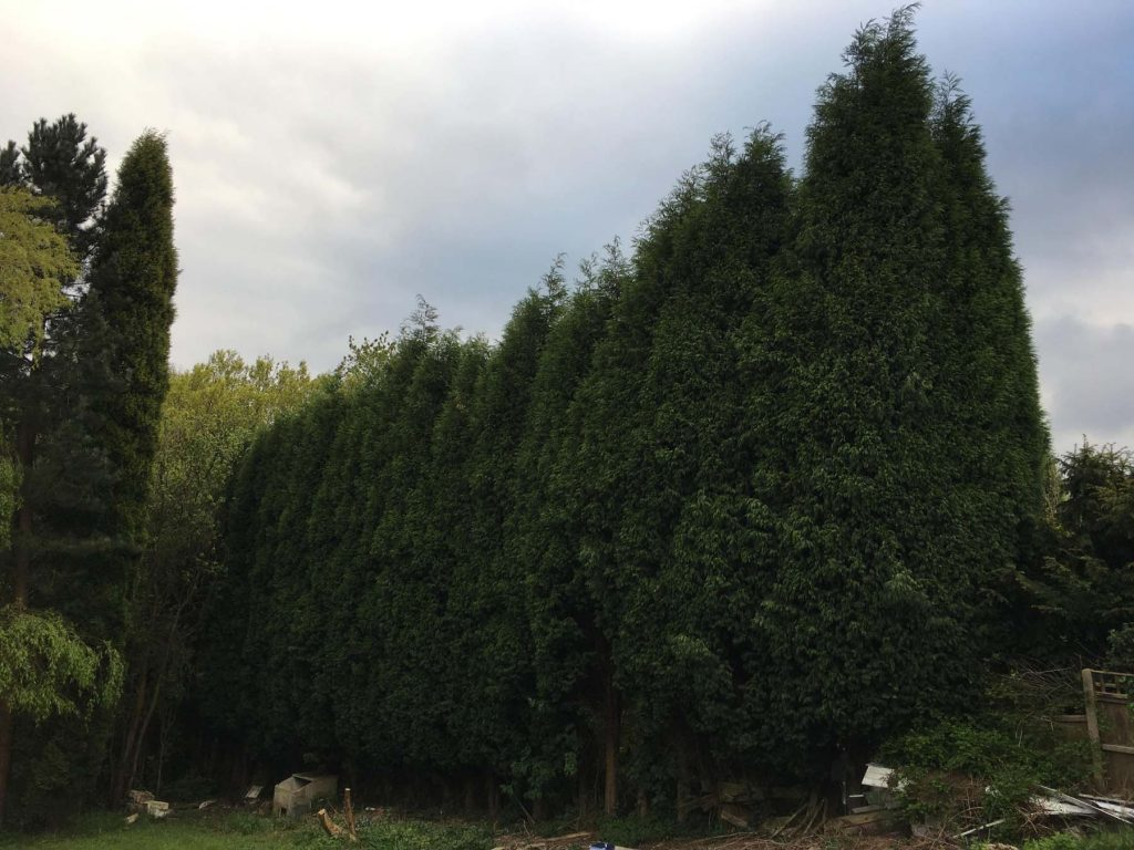 Hedge Reduction Service 1