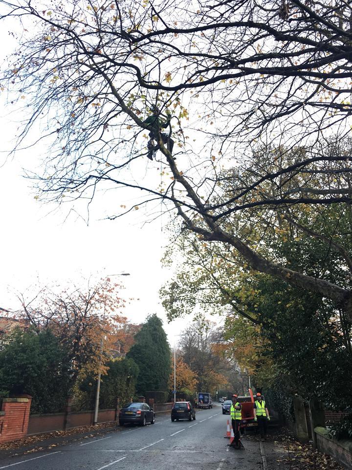 Tree Surgeon Crown lifting Service