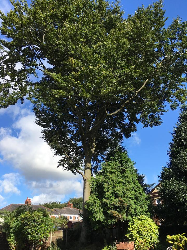 Tree Surgeon Dismantling Service 1