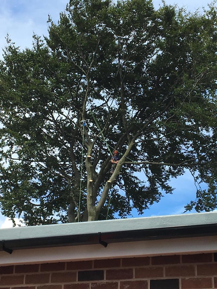 Tree Surgeon Dismantling Service 2