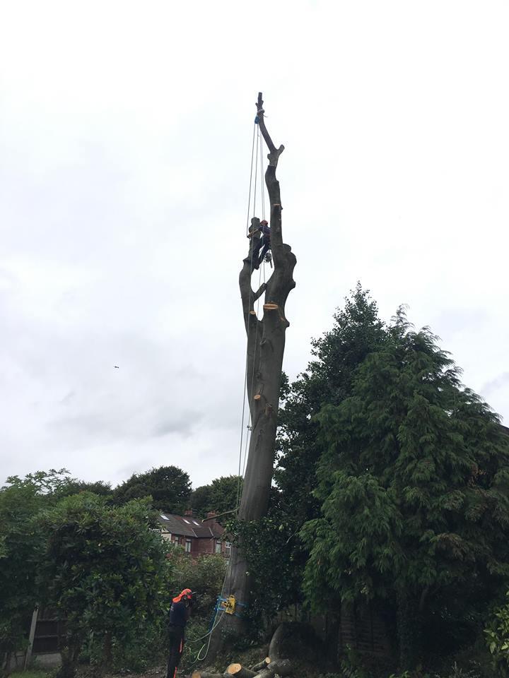 Tree Surgeon Dismantling Service 4