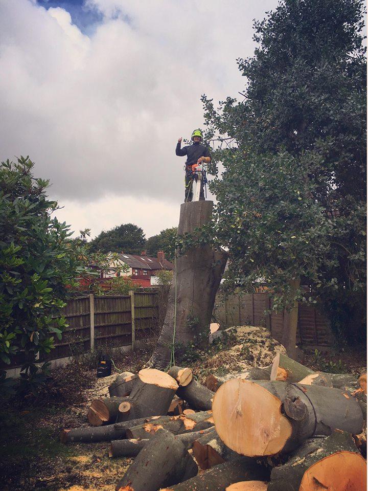 Tree Surgeon Dismantling Service 5