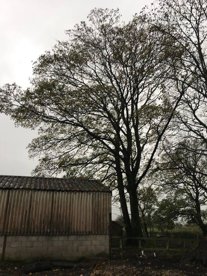 Tree Surgeon Felling Service 1