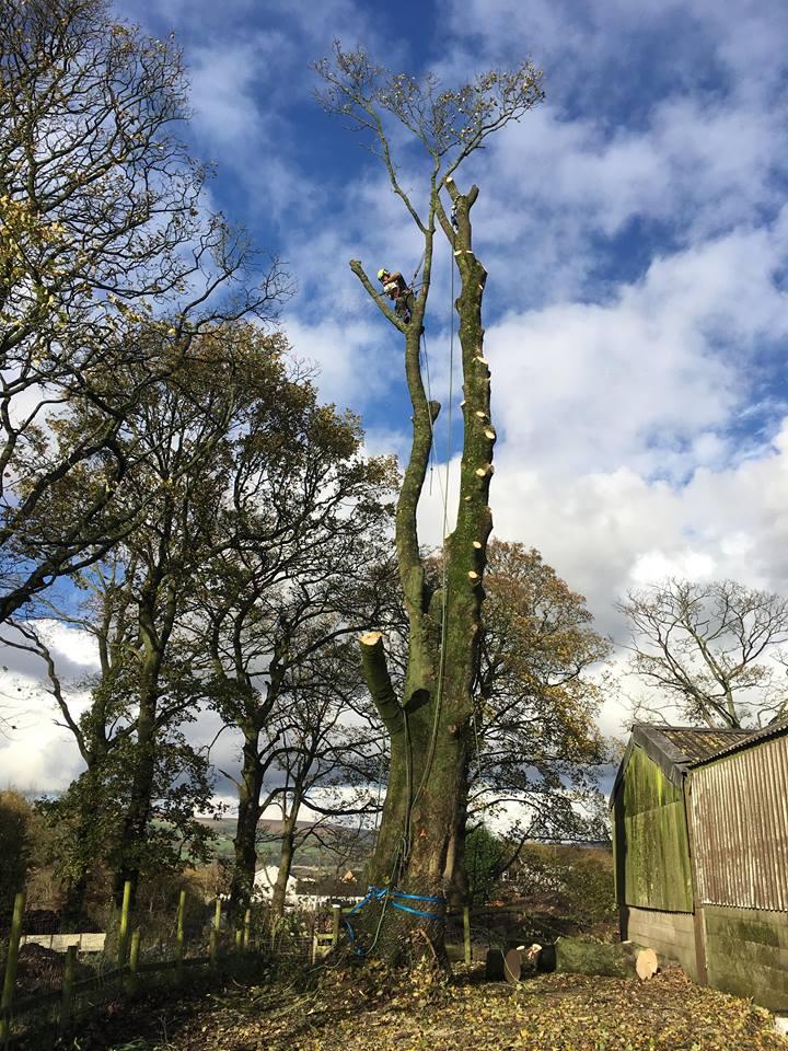 Tree Surgeon Felling Service 2