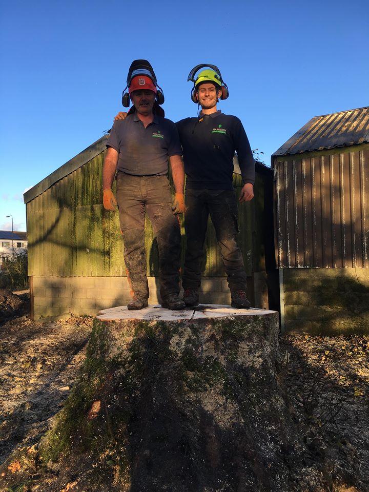 Tree Surgeon Felling Service 3