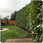 Tree Surgeon Hedge Pruning Service
