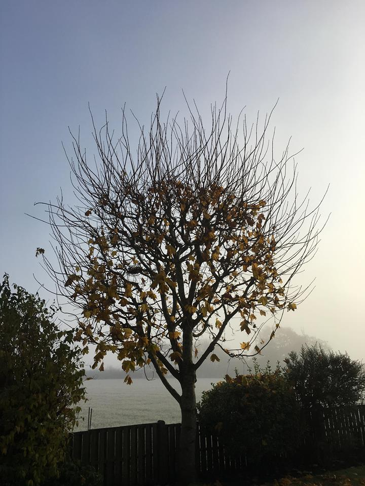 Tree Surgeon Pollading Service 1