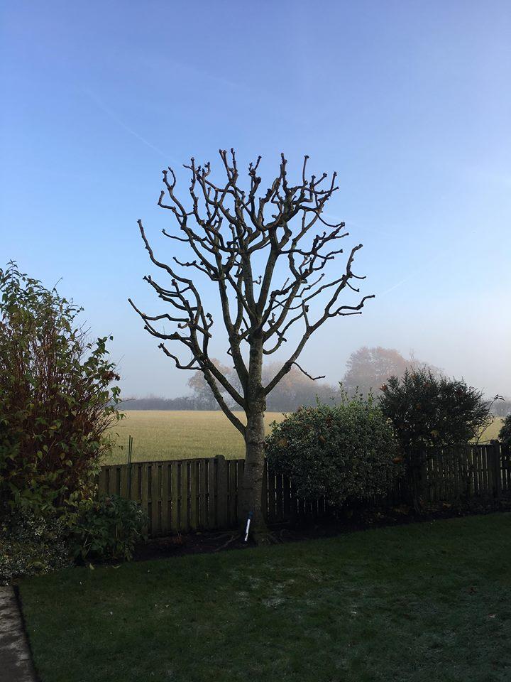 Tree-Surgeon-Pollading-Service-2