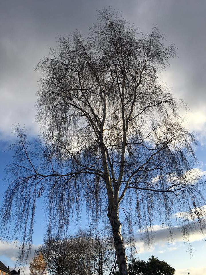 Tree Surgeon Pruning Service 1