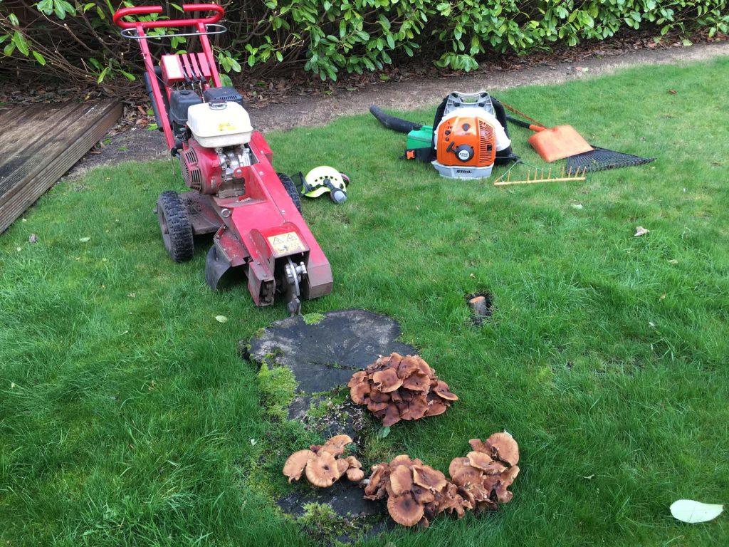 Tree Surgeon Stump Grinding Service 1