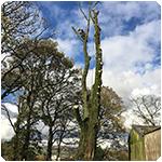 Tree Surgeon Tree Surgeon Felling Service