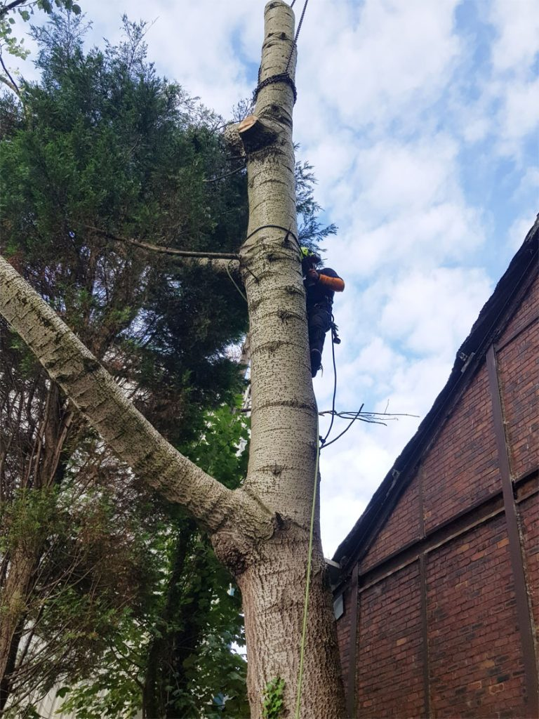 3. Tree Surgeon Work Golborne near Warrington