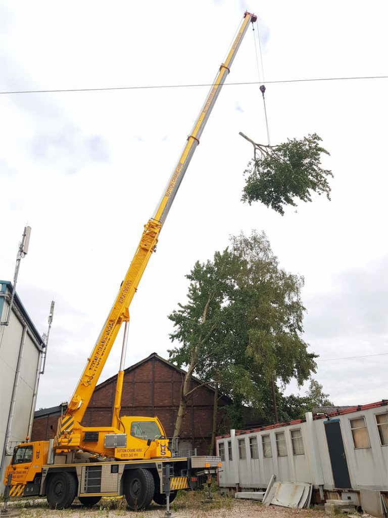 4. Tree Surgeon Work Golborne near Warrington